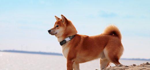 Meilleurs colliers GPS pour chien - traceurs GPS pour chien