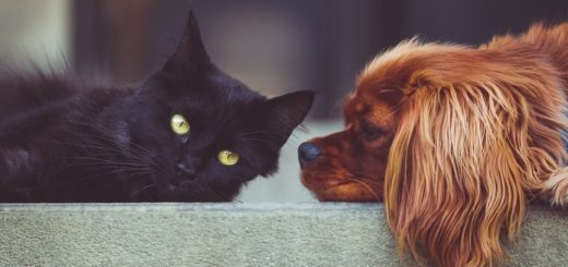 Top 10 des meilleurs sites de nourriture pour chien et chat, meilleurs sites de croquettes chien et chat, meilleurs sites pour acheter de la nourriture pour chien et chat